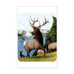 Elk Wapiti Mini Poster Print
