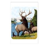 Elk Wapiti Postcards (Package of 8)