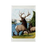 Elk Wapiti Rectangle Magnet