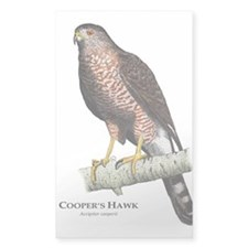 Cooper's Hawk Decal