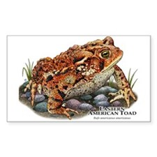 Eastern American Toad Decal
