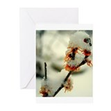 Witch Hazel Greeting Cards (Pk of 10)