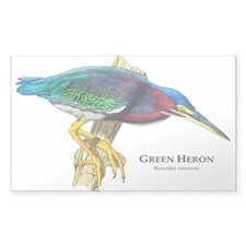 Green Heron Decal
