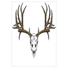 European mount mule deer