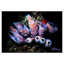 Night sponges