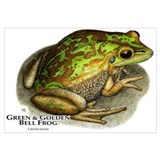 Green &amp; Golden Bell Frog