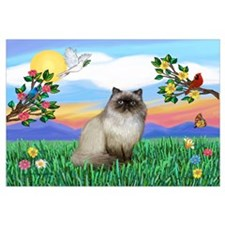 Bright Life / Himalayan Cat