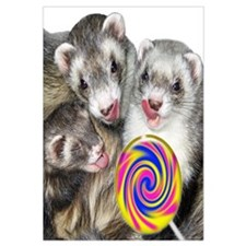 Ferrets with Lollipop