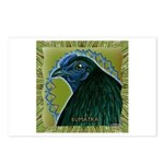 Framed Sumatra Rooster Postcards (Package of 8)