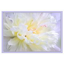 Cute Flower photography Wall Art