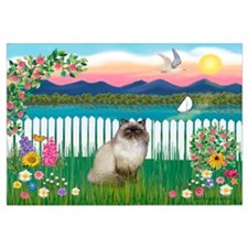 Garden Shore / Himalayan Cat