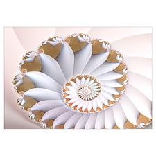 """""""White Nautilus"""" Fractal Art"""