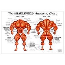 MUSCLEHEDZ Anatomy Chart