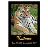 Tatiana the Tiger