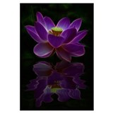 Moonlight Lotus Flower