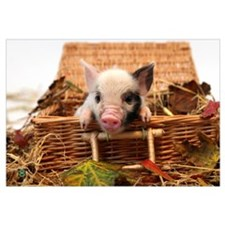 Cute Piglet Wall Art