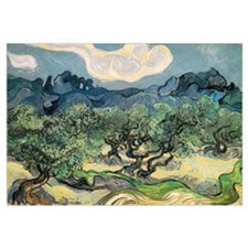 Olive Trees with the Alpilles