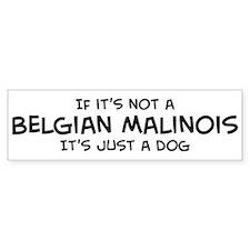 Belgian Malinois Bumper Car Sticker