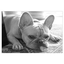 Cute Frenchie Wall Art
