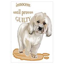Havanesse guilty