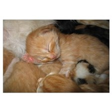 Newborn Kitten Sleeping