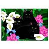 Black Cats Callas