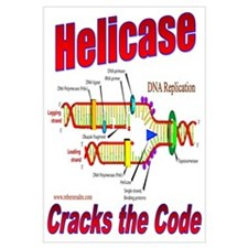Helicase Cracks the Code