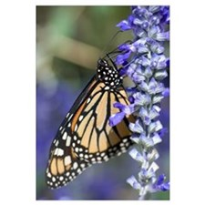 Monarch Purple Flower