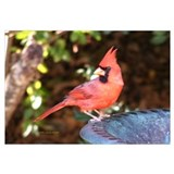 Striking Cardinal