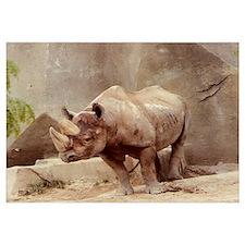 Rhinocerous Photo