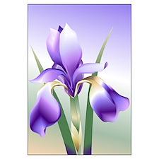16 x 20 Iris