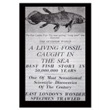 Coelacanth Announcement 11x17 Print
