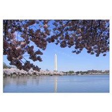 Funny Washington dc cherry blossom Wall Art