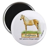 Californio, famous palomino Morgan stallion magnet