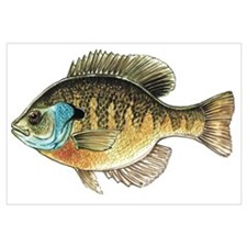 Bluegill Bream Fishing