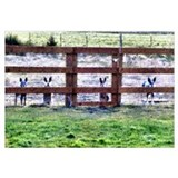 - Gang by fence line