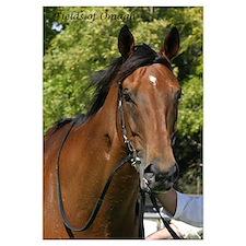 Funny Champion racehorse Wall Art