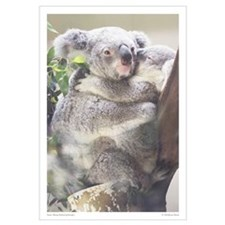 Koala Print 1