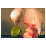 Cockatoo &amp; Flower