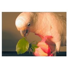 Cockatoo & Flower