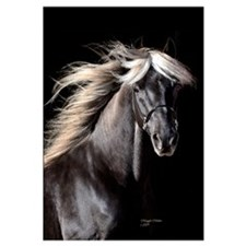 Choco Rocky Mountain Horse