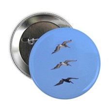 "3 Pelicans 2.25"" Button (10 pack)"