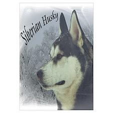 Siberian Husky Reflections