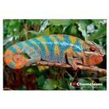 Unique Chameleon Wall Art