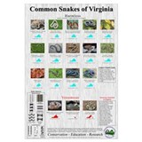 Common Snakes of VA