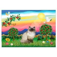 Bright Country / Himalayan Cat