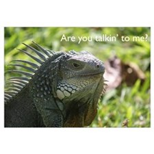 Iguana: You talkin' to me?