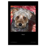 Unique Cute silky terriers Wall Art