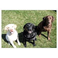 Lab Trio