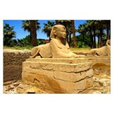Royal Sphinx